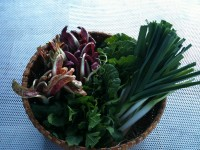 January 16th, 2012  harvest:  leeks, arugula, napa, radicchio tardivo